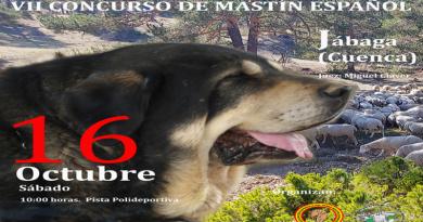 VII Concurso Nacional de Mastín Español
